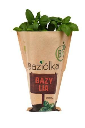 Bazylia doniczkowa świeża BIO (Polska)